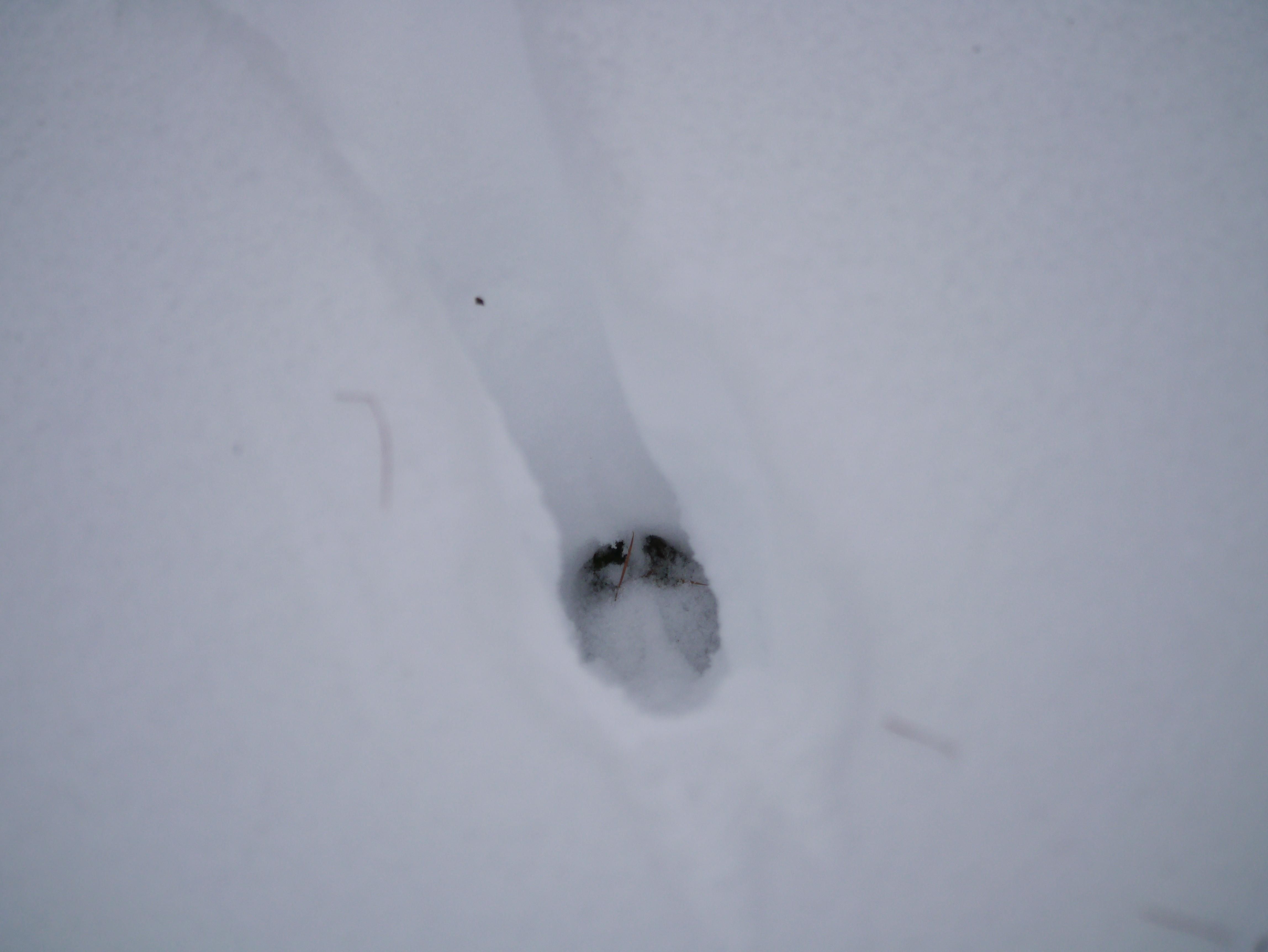 Spuren Im Schnee Naturnah Unterwegs