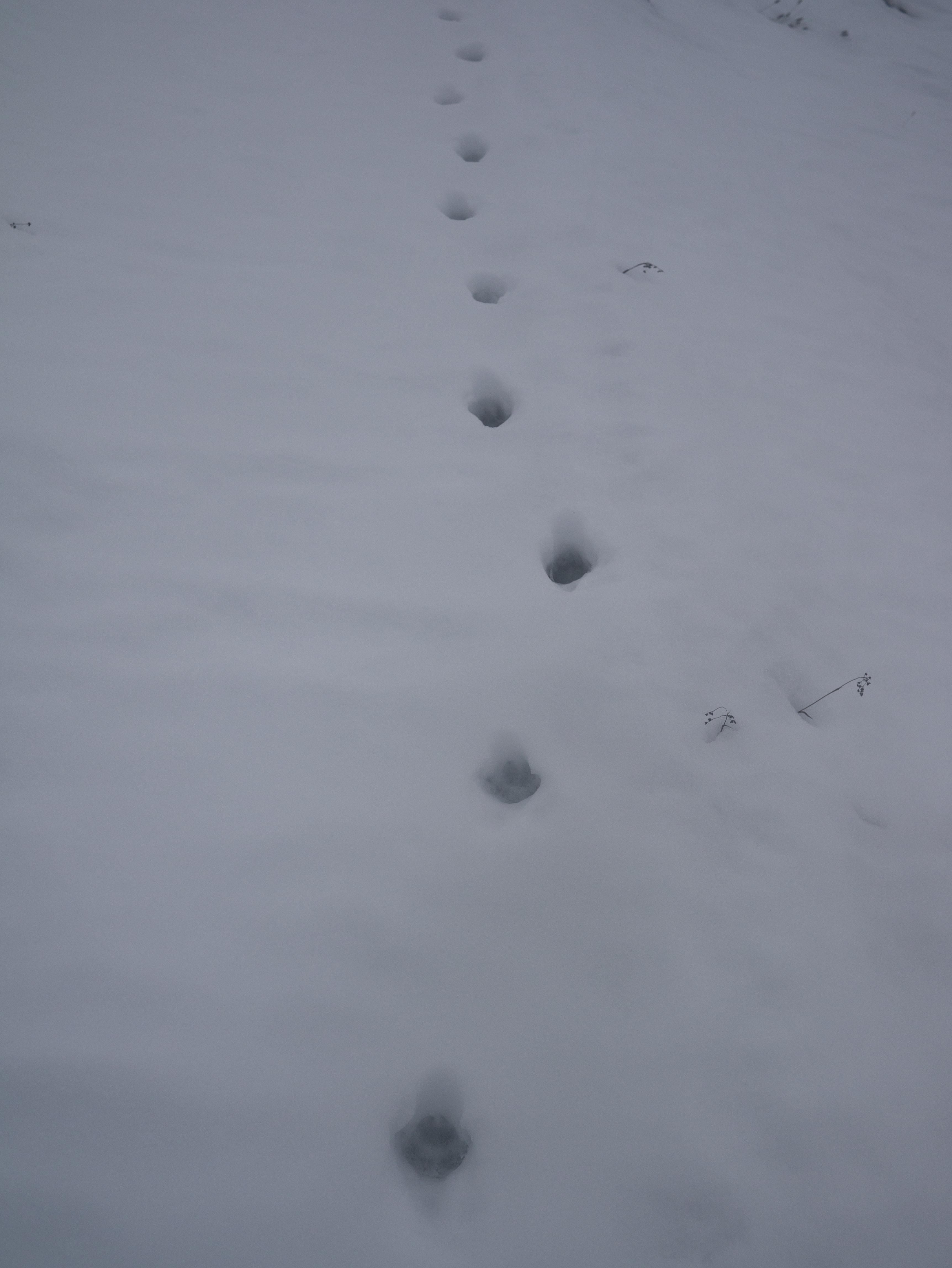 spuren im schnee – naturnah unterwegs