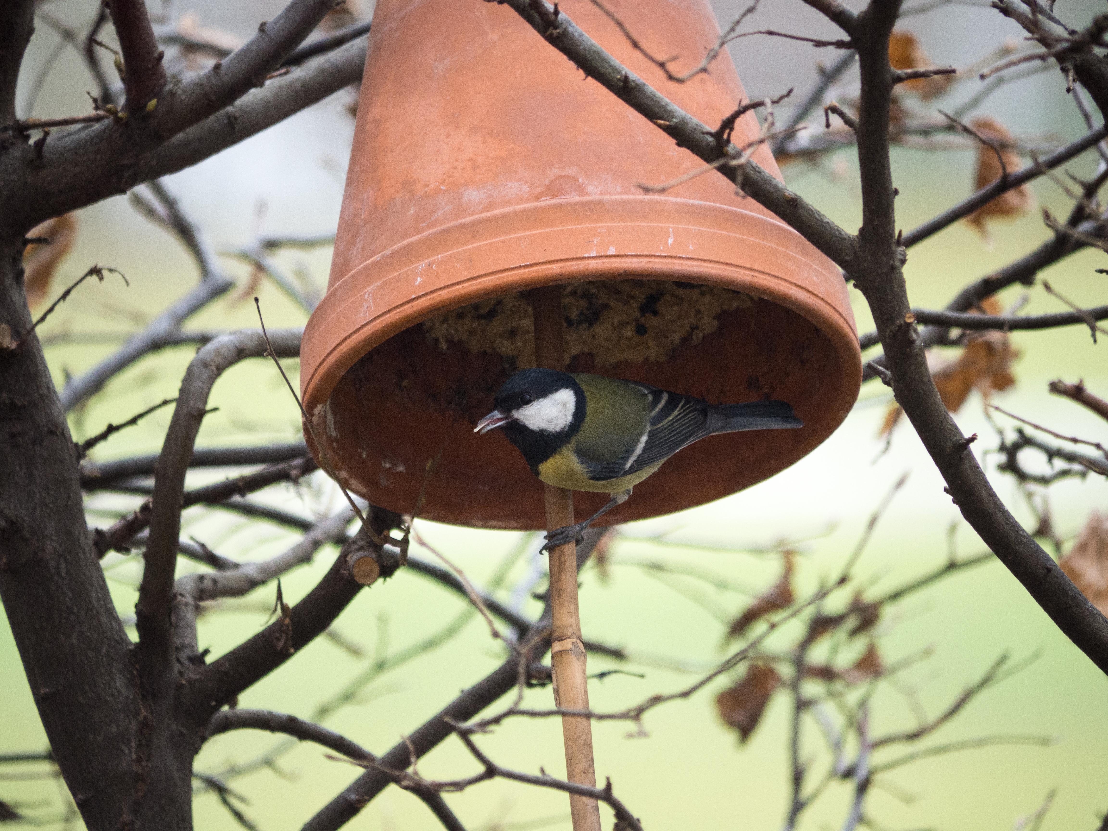 Vogelfutter Selber Machen Ein Schnelles Rezept Naturnah Unterwegs