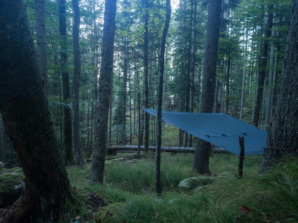 """""""Strawanzen"""" oder: Flanieren im Wald"""